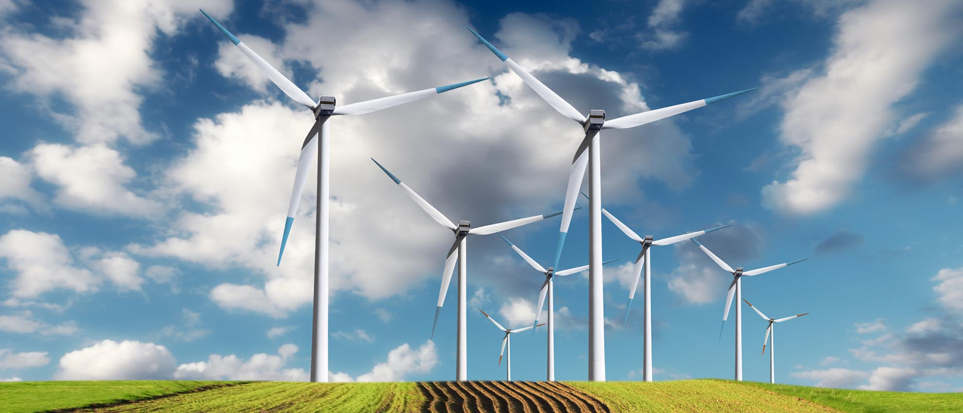 EDIBLE OIL & COMMODITY FINANCE REAL ESTATE GREEN ENERGY CONTACT